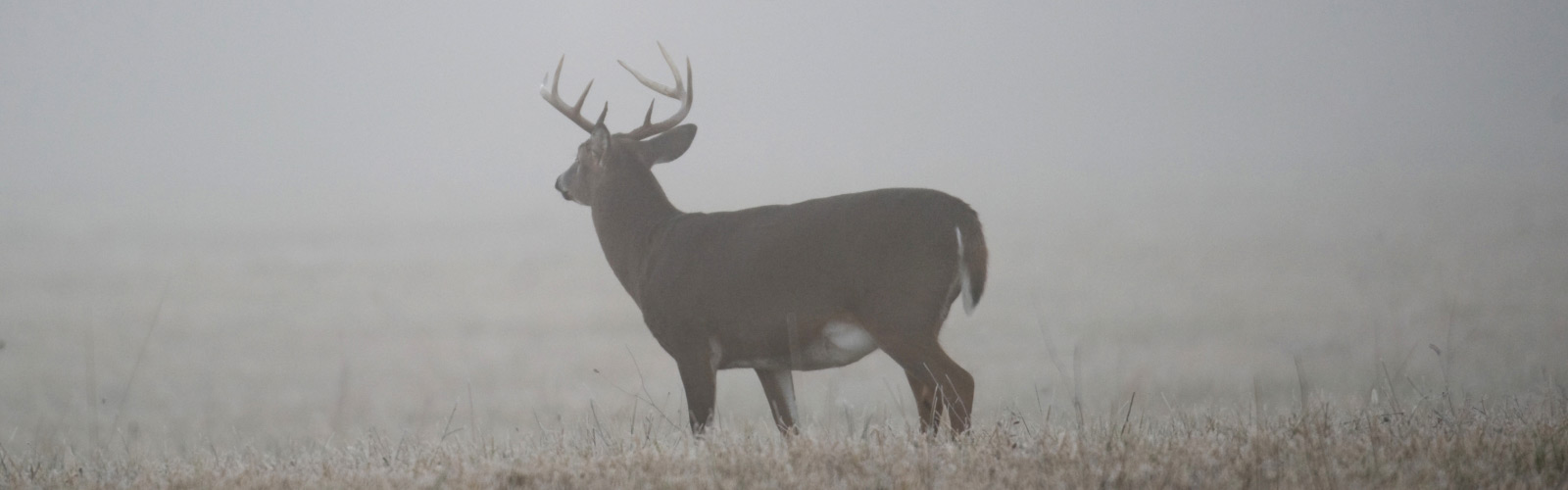 A Whitetail's Signature - The Tarsal Gland