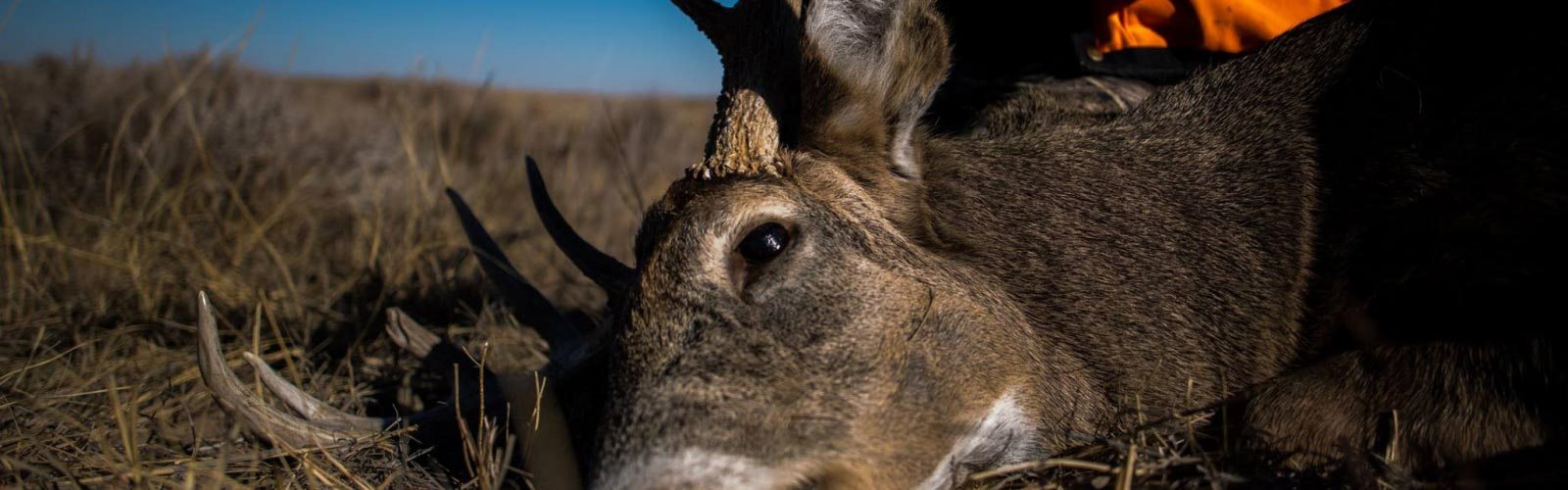 2607ad6a087c1 Through The Eyes of a Deer - News & Resources